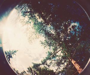 tree, photography, and sun image