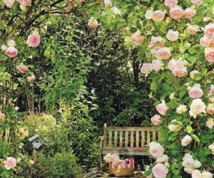 beautiful, spring, and roses image