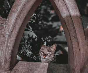 cat, cats, and her image