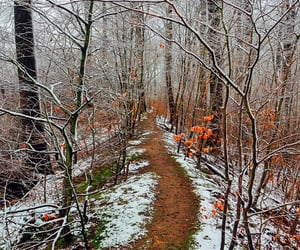 Along the Winter Path Home