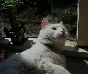 alternative, sunlight, and whitecat image
