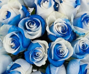 aesthetic, flowers, and roses image