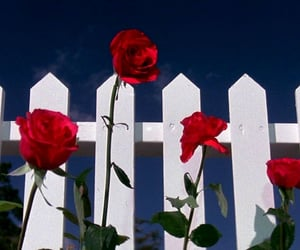 aesthetic, blue, and roses image