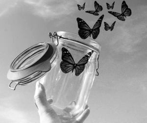 aesthetic, butterflies, and white image