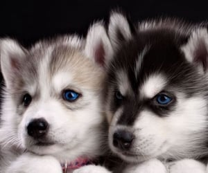 awesome, blue eyes, and cuteness image
