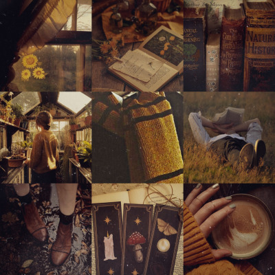 article, harry potter, and fantastic beasts image