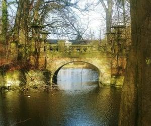 bridge, nature, and path image