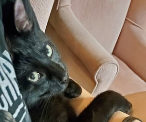 big eyes, black cat, and cuddly image