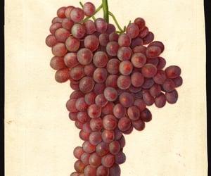 dibujo, fruta, and amanda newton image