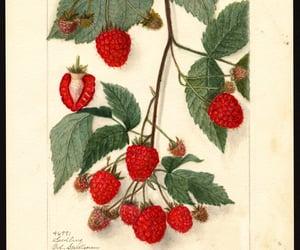 blackberries, moras, and dibujo image