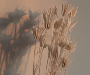 flowers, aesthetic, and beige image