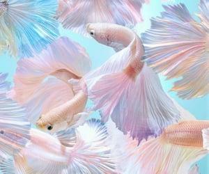 aesthetic, aquarium, and background image