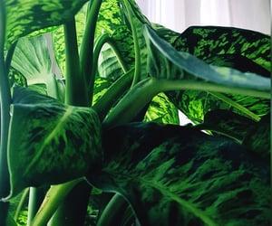 jungle, decor, and green image