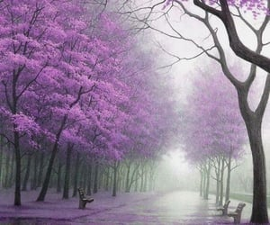 purple and tree image