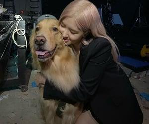 lucky dogie