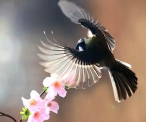 animals, beautiful, and bird image