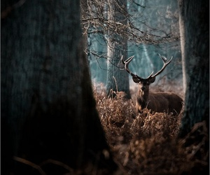 deer, animal, and forest image