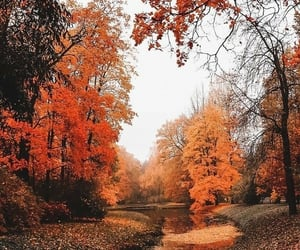 aesthetic, fall, and orange image