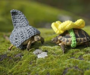 Tiny Tortoises
