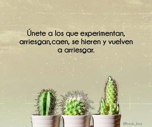 cactus, paulo coelho, and union image