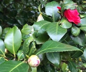 bloom, flowering, and garden image