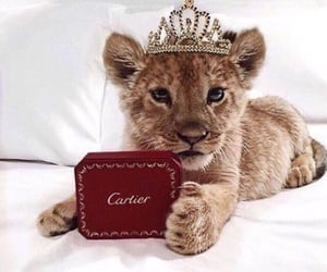 cub, baby, and cartier image
