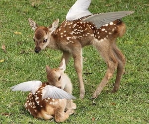 aesthetic, cottagecore, and deer image
