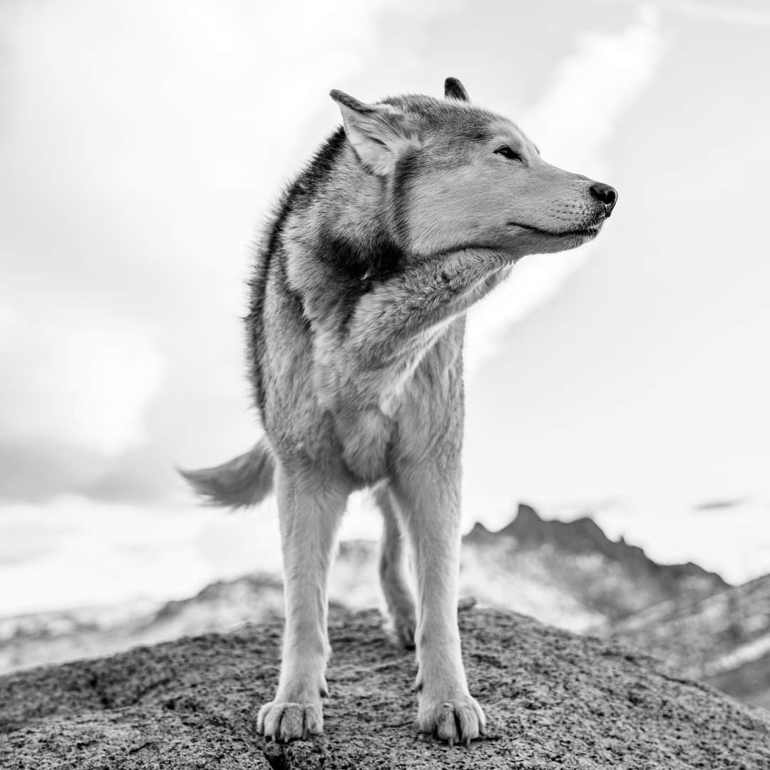 nature, black and white, and freedom image