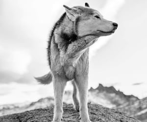 black and white, freedom, and nature image