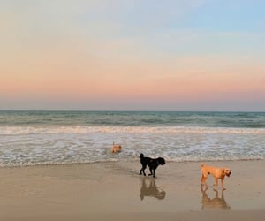 animals, beach, and pets image