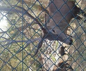 deer, zoo, and garden image