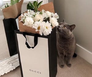 gucci, flowers, and cat image