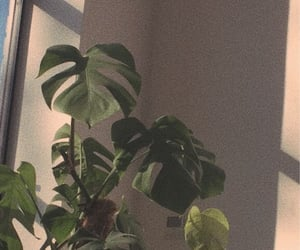 plants, aesthetic, and wallpaper image