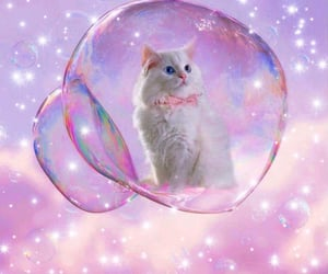 bubble, cats, and dreamy image