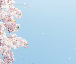 cherry blossom, girly, and japan image