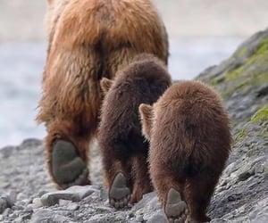 babies, following, and bear image