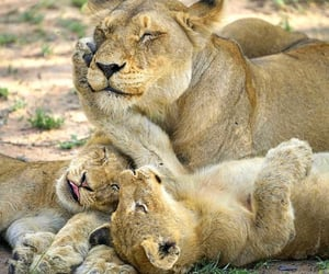 Family by Shirley Jagnarain