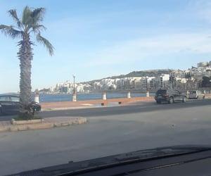 palmtree, malta, and sea image
