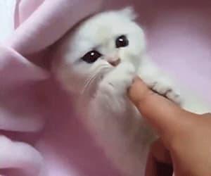 gif, adorabe, and animals image