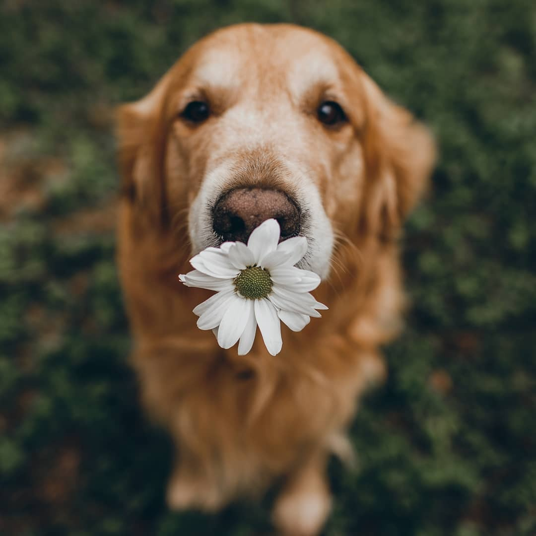 animals, nature, and adorabe image
