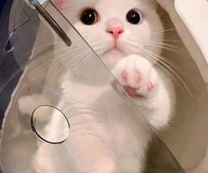 animals, cats, and joy image