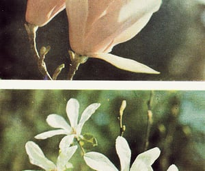 flowers, theme, and vintage image