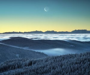 fog, forest, and moon image