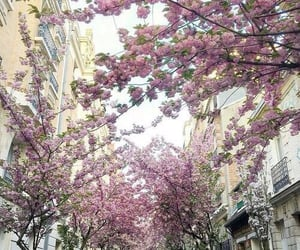 pink and spring image
