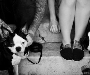 dog, tattoo, and couple image