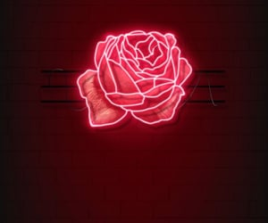 aesthetic, flower, and love image