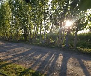 naturaleza, verano, and summer image