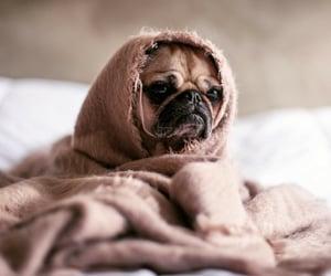 I love my dog ❤🐕🦺  #dog #dogs #puppy #doglover #doglovers #puppylove #puppies #ilovemydog #dogphotography #doglove