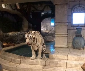 tiger, gucci, and white image