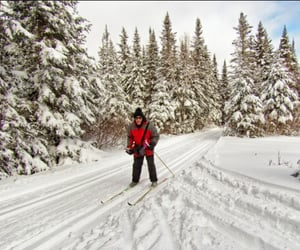 canada, forest, and snow image